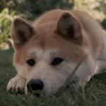 घमंडी कुत्ता मोंटू की कहानी – A arrogant  dog story in hindi