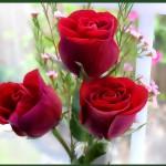 गुलाब के  फूलो के बलिदान की कहानी (The story of the sacrifice of roses)