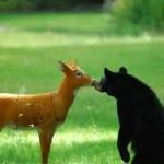 मोंटी हिरण और बंटी भालू की कहानी