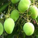आम के पेड़ की मोटिवेशनल कहानी