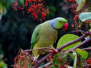 parrot ke kahani