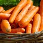गाजर से सीख – दो छोटे दोस्तों की कहानी