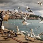 जाल में फॅसे कबूतरों की कहानी |  Unity Is Strength