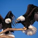 दो बाजो के उड़ान की कहानी | Eagle Hindi Inspirational Story