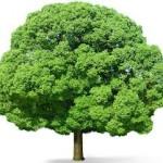 पेड़ लगावो जीवन बचावो | जानो कैसे ?