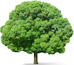 green tree ko kaise bachaye