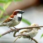 छोटी चिड़िया की प्यारी  कहानी