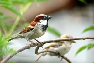 small birds story in hindi